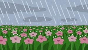 bg_rain_natural_flower[1]